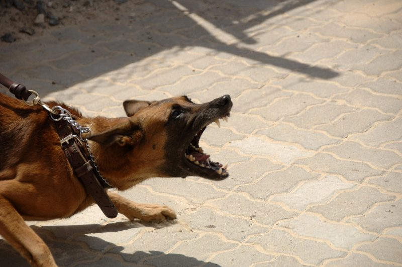 Dog attacks in Leeds on the rise